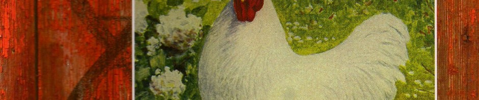 The Art and Science of Breeding: Creating Better Chickens